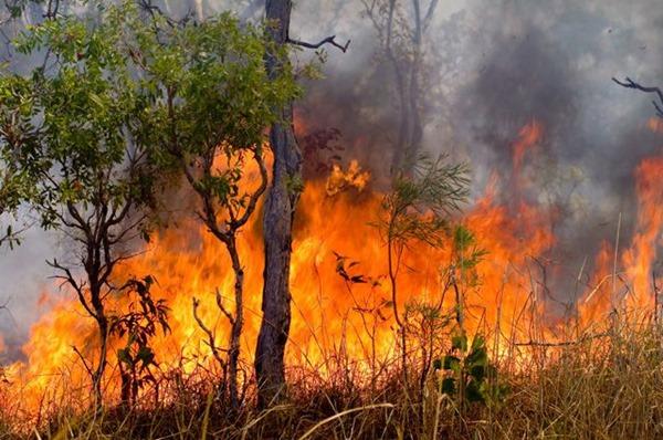 Видеонаблюдение поможет в борьбе с лесными пожарами